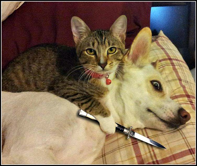 cat-knife-dog