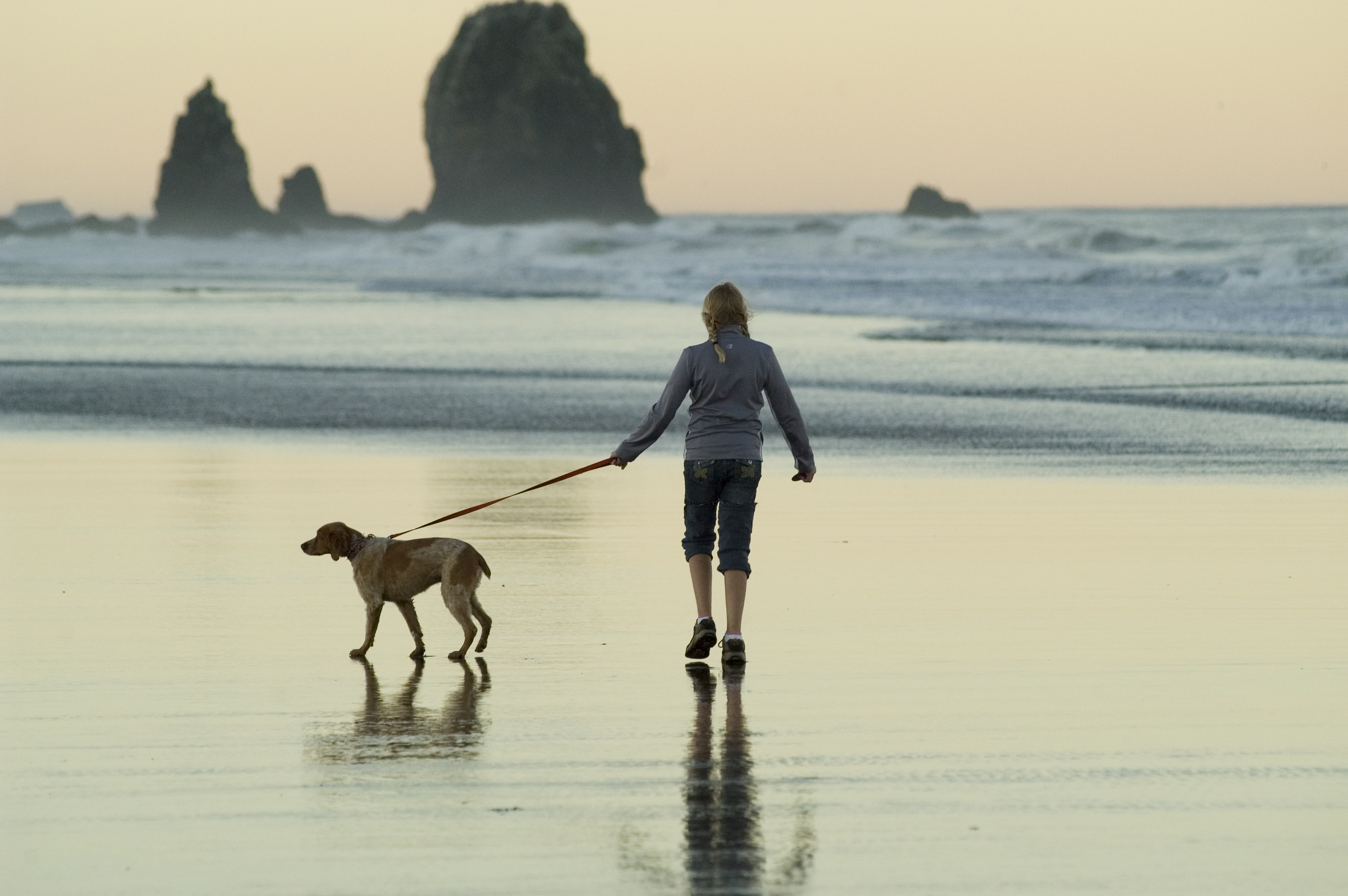 Hund-Leine-Strand