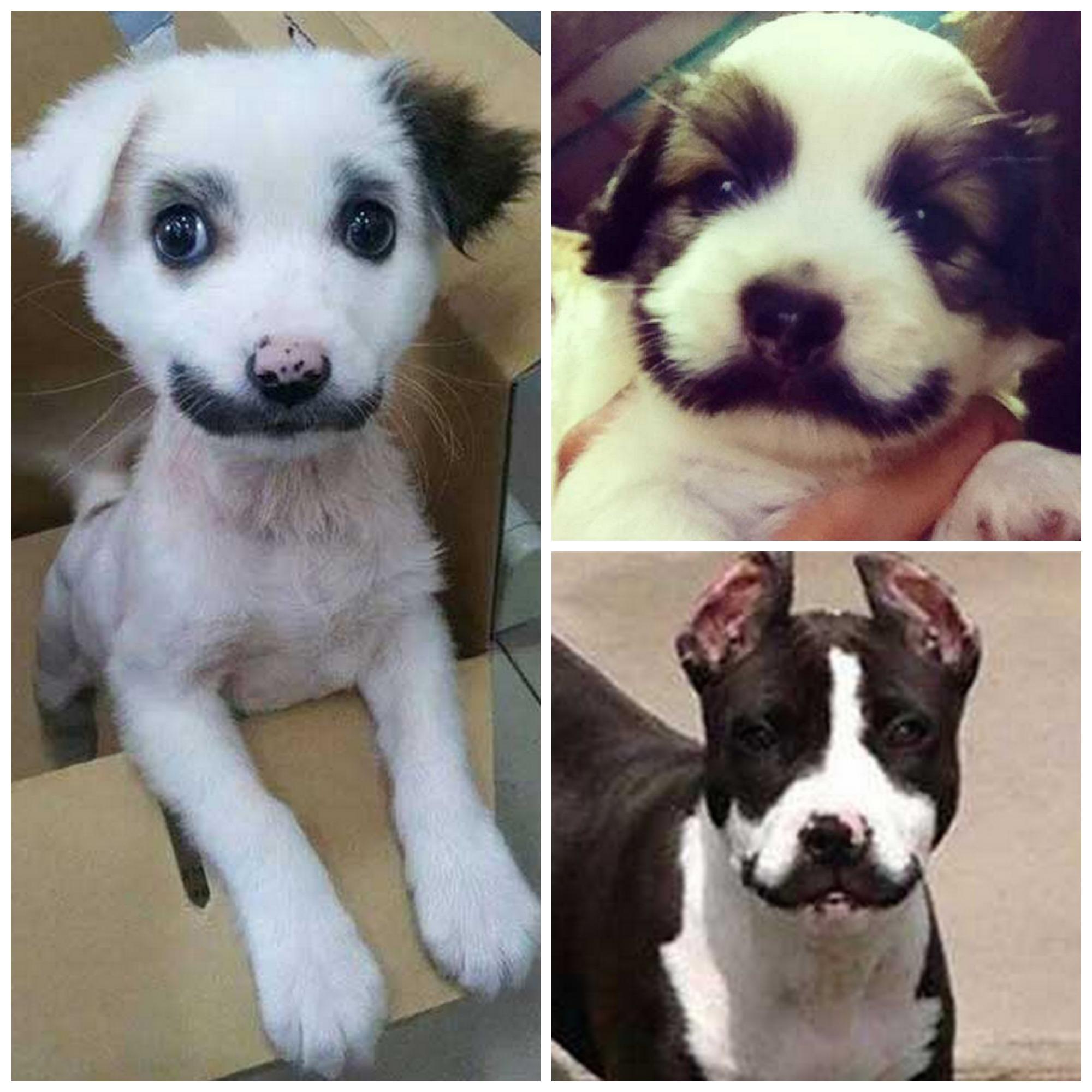 Les moustachus
