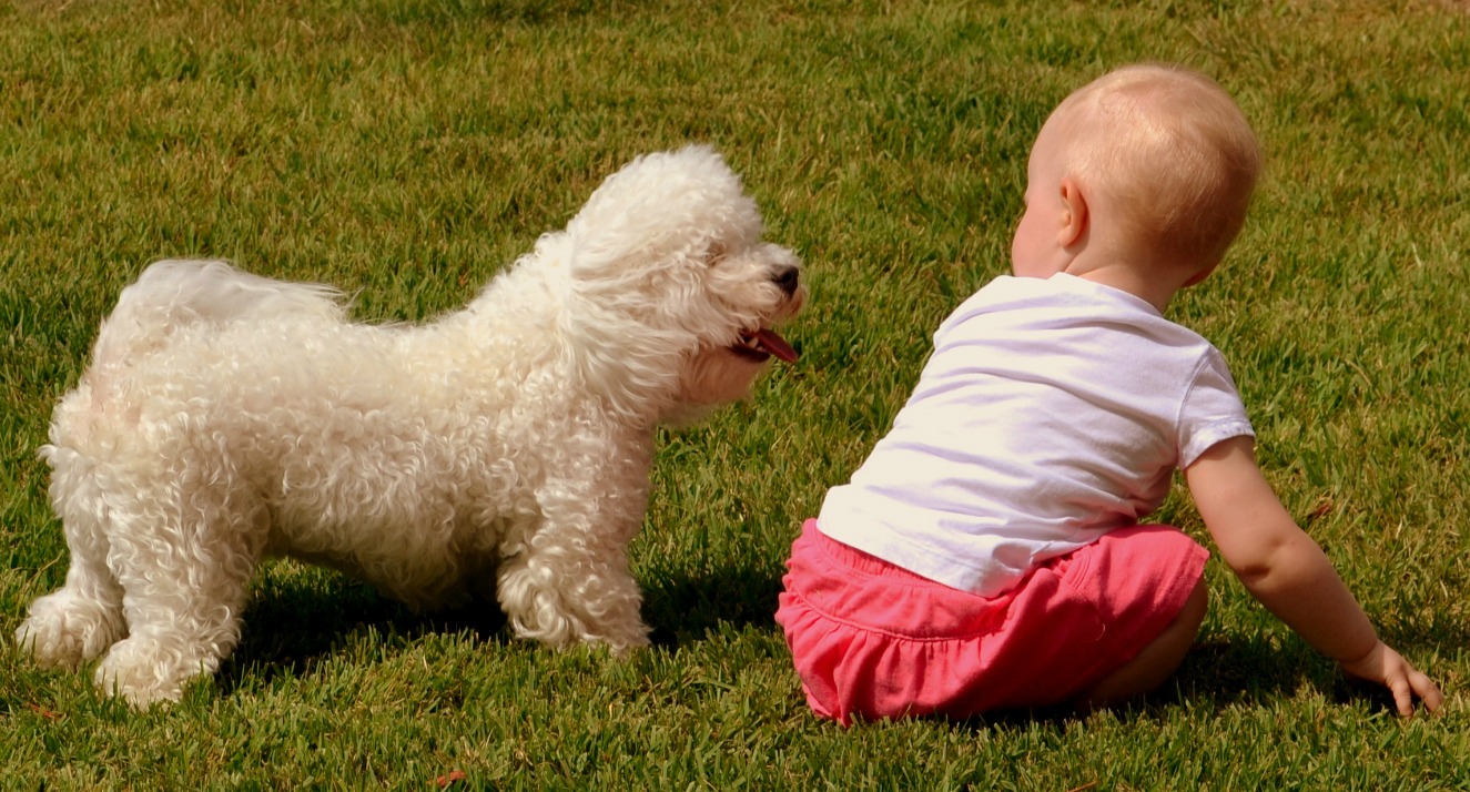 Dog+Baby