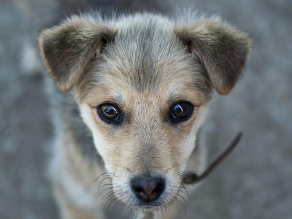 Hund-Spanien Blick