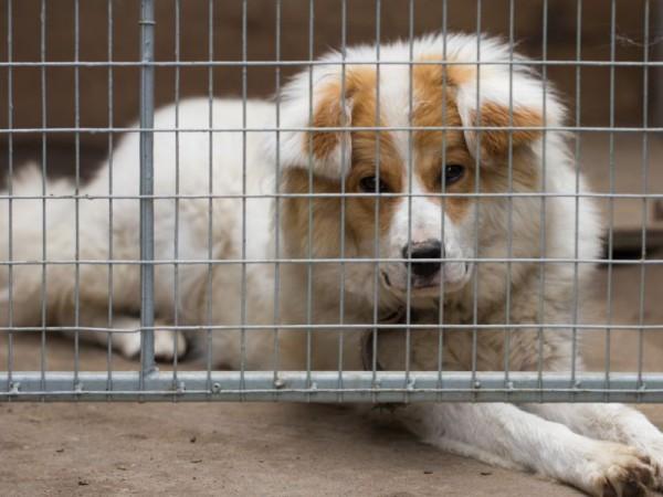 Hund-Tierheim