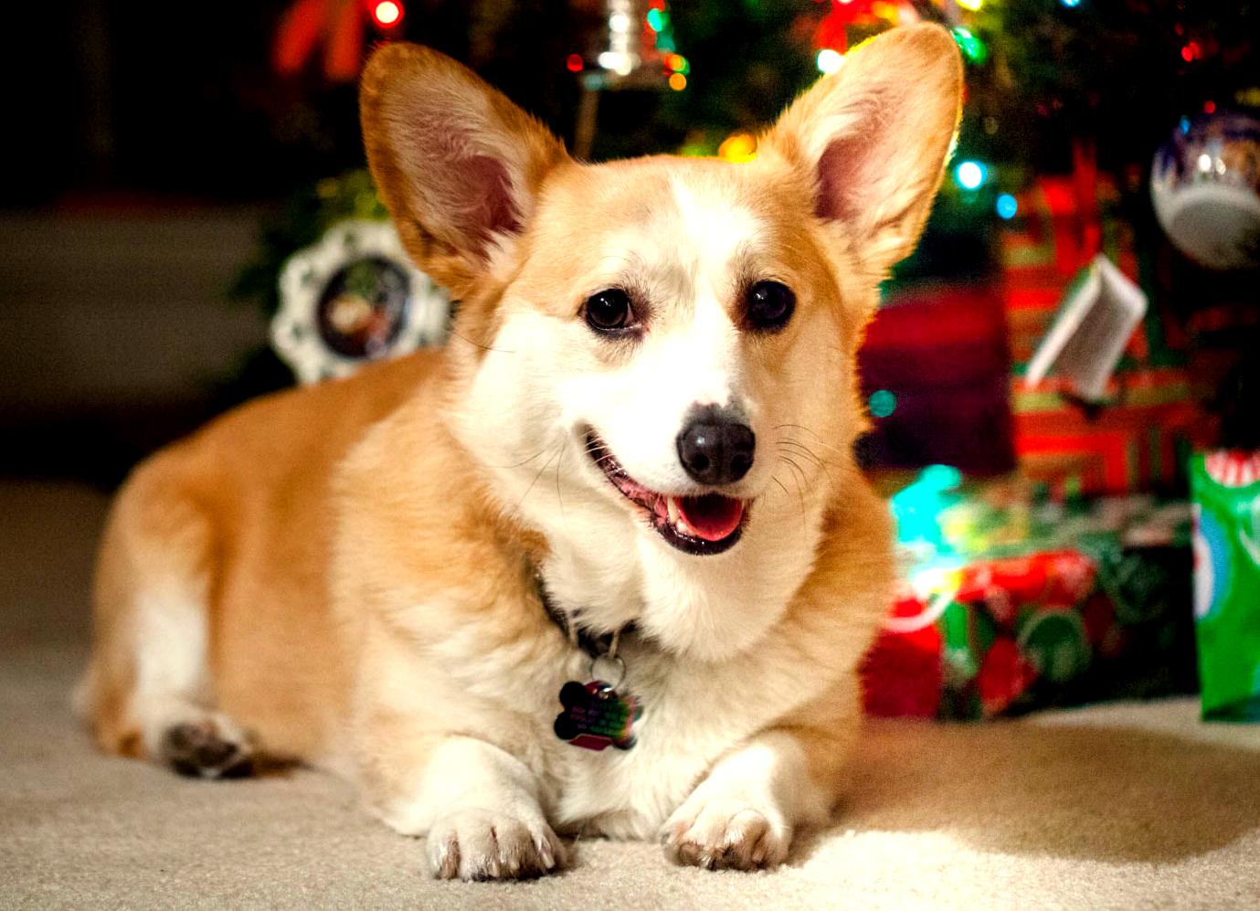 Geschenkideen für Hundefreunde - Gublog