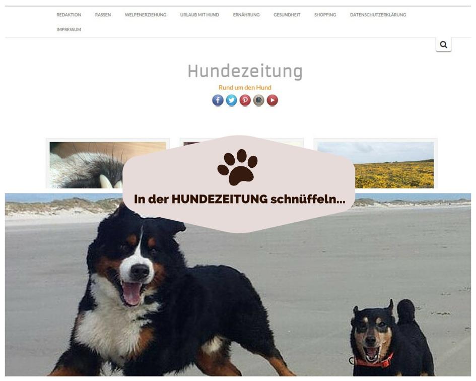 Hundezeitung
