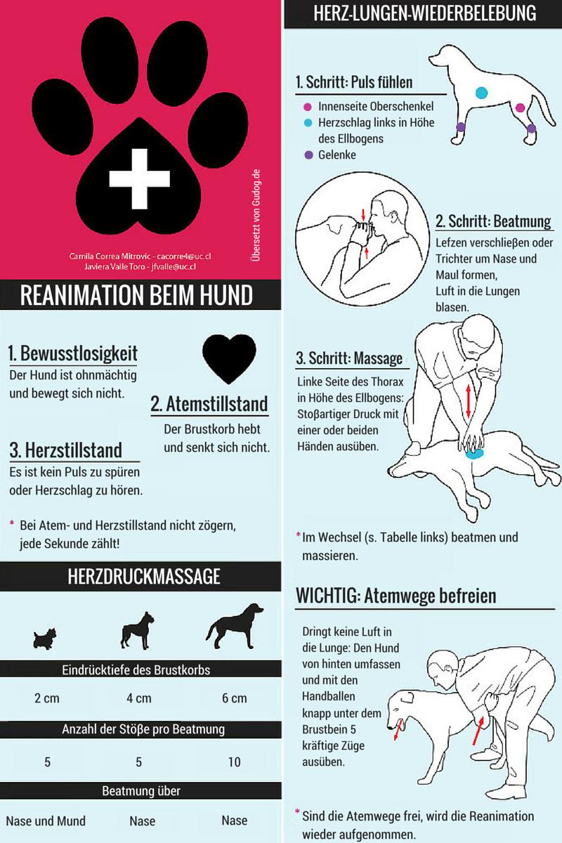 Reanimation DE