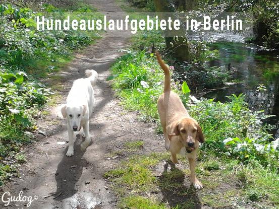 Hundeauslaufgebiete in berlin Kopie