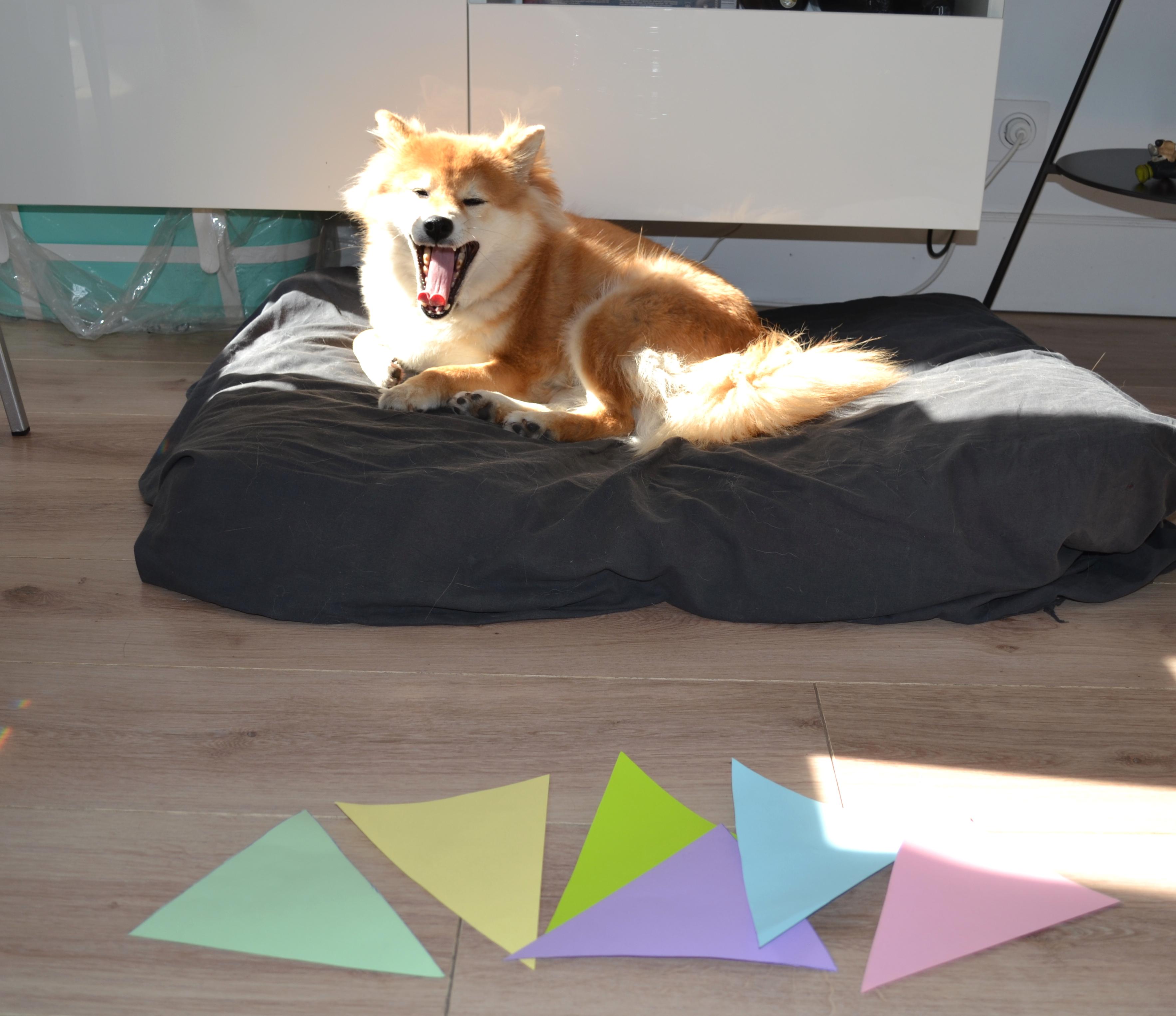 Personalisierte Girlande für deinen Hund_2